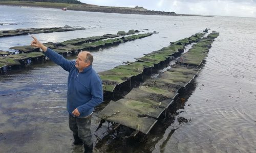 Oyster Farming In Ireland